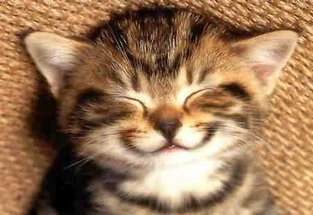 pleased cat face